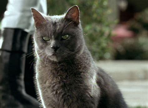 film blue russian garfield 2004 cinema cats