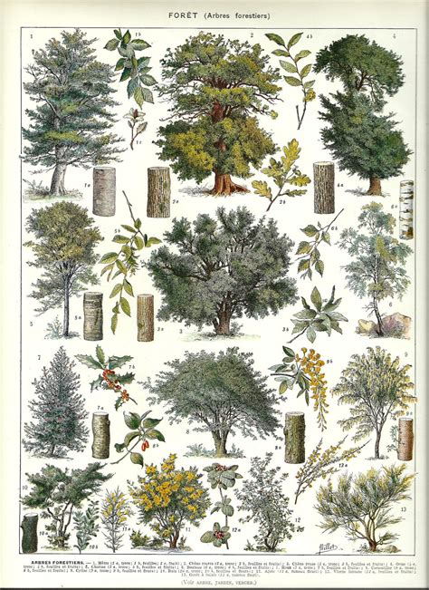 Garden Of Dictionary Forest Trees 1 Vintage Botanical Dictionary Print