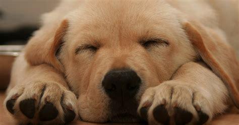 microchips for dogs free microchip dogs trust scheme powis partners vets stourbridge