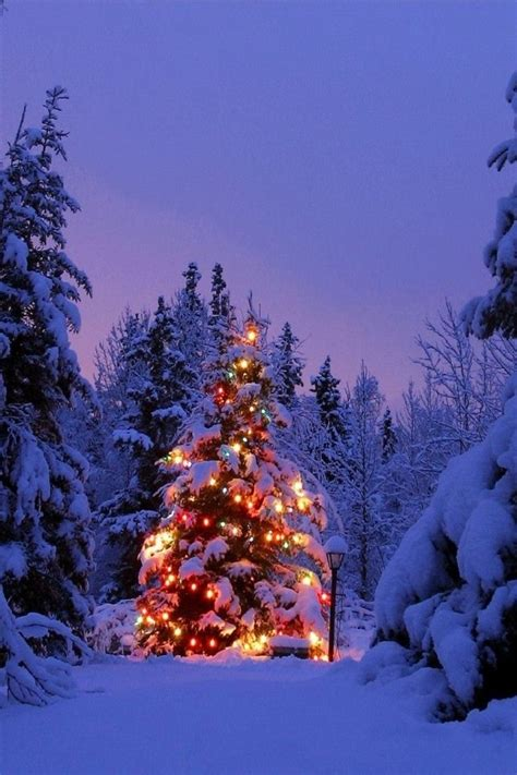 lit up tree in the forest christmas pinterest