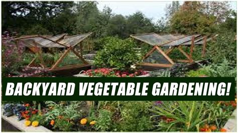 how to start a vegetable garden in your backyard for