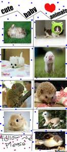 Cute Baby Animal Memes - cute baby animal memes pictures to pin on pinterest