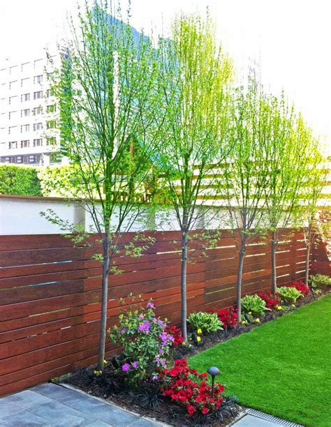 Backyard Trees For Privacy by This Backyard Features An Ipe Fence Bluestone Patio Artificial Turf Lawn