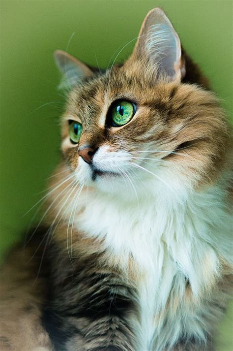 Pin by Julia on Cuteness   Pinterest   Eye, Green Eyes and