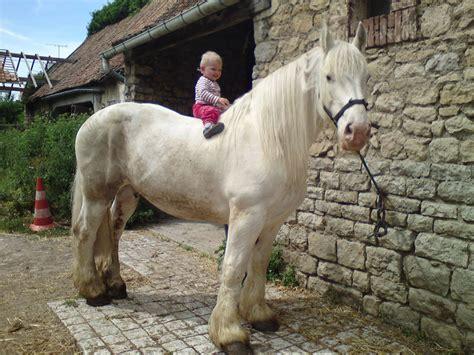 ah dada sur mon bidet le p ti prince sur cheval blanc ecurie de bouquinghen