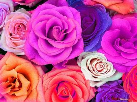 colorful wallpapers of flowers colorful flower wallpapers wallpaper cave