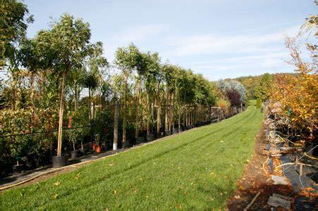 blumen im herbst 4293 die baumschule klosterhalfen saisonpflanzen planzen