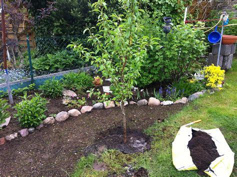 pfirsichbaum pflanzen kleingarten ideen
