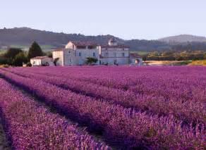 file lavender field jpg wikipedia
