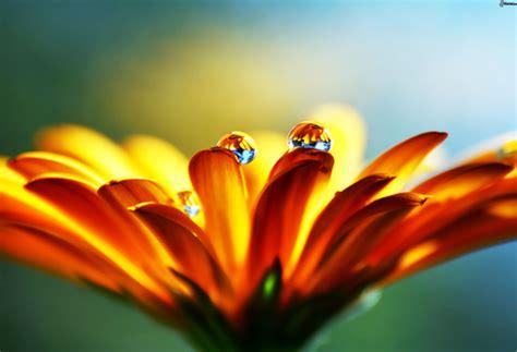 fior d arancio pianta fiore arancio