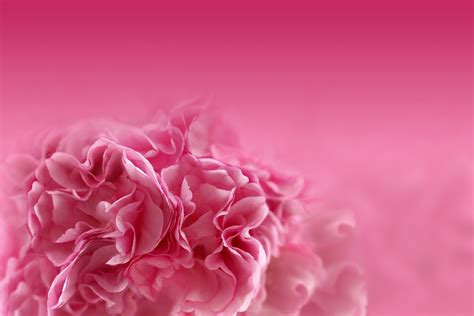 Flowers Pink wallpaper pink flowers hd flowers 5812