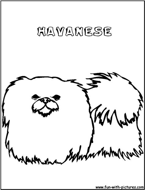 havanese dog coloring page havanese coloring page