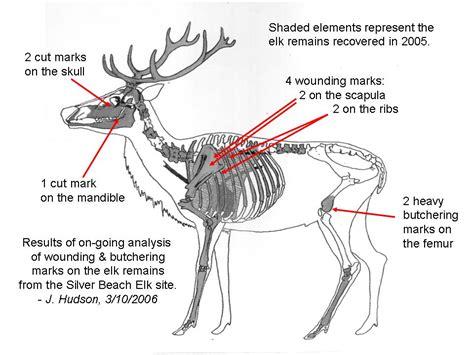 butchering a deer diagram the hunters before us part iii in search of ancient elk