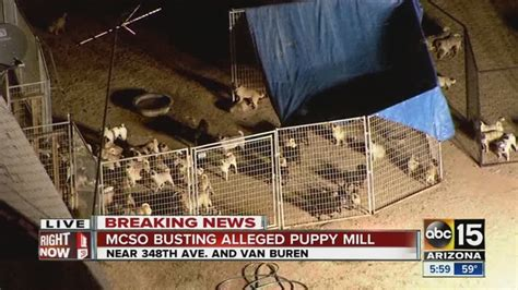 Mcso Warrant Search Az Mcso Serves Search Warrant At Puppy Mill In West Valley Abc15 Arizona