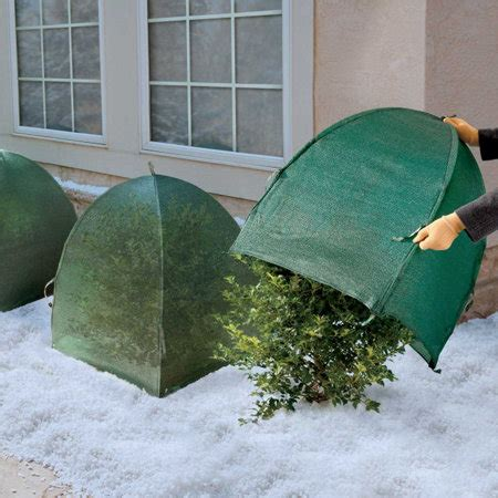 abdeckung pflanzen winter winter shrub cover improvements catalog