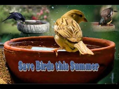 save birds this summer youtube