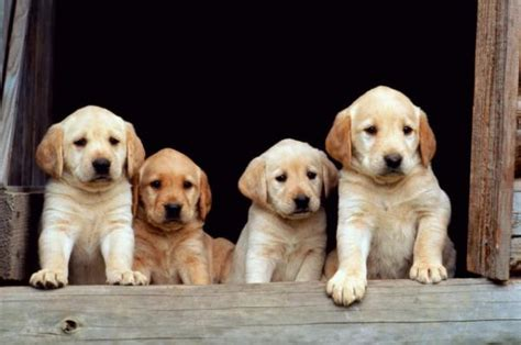 puppy family pet store puppy policy helps dogs across u s tails of the city