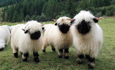 como se le llama al conjunto de poetas mejor conjunto de frases como se llama un conjunto de ovejas