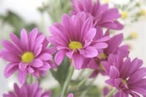 Fresh Flowers J Aaron Farr Flickr