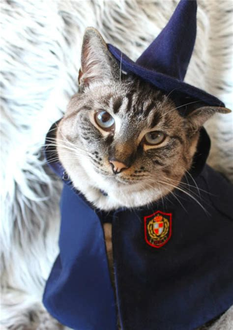 wizard cat 10 signs that your cat is a wizard