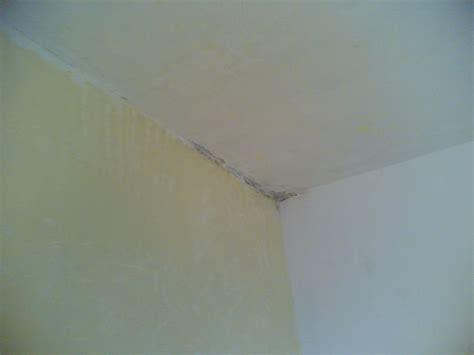 muffa soffitto muffa soffitto muffa ponte termico muffa al soffitto