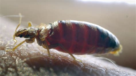 exterminator bed bugs keeping your new home free of bugs hiring a bed bug