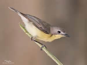 lavere blog small birds