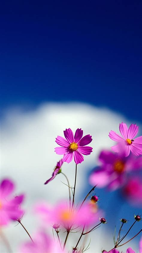 smiles  flowers hd mobile wallpaper vactual papers