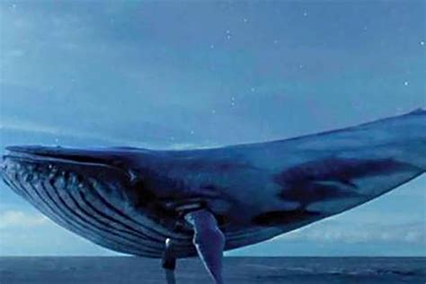 wale gane the truth about blue whale wired uk