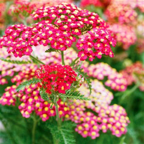 anna s perennials fall flowering perennials perennials flowers fall gardening guide sunset