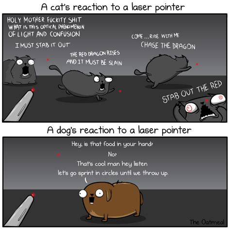 Laser Pointer Meme - a cat s reaction to a laser pointer the oatmeal