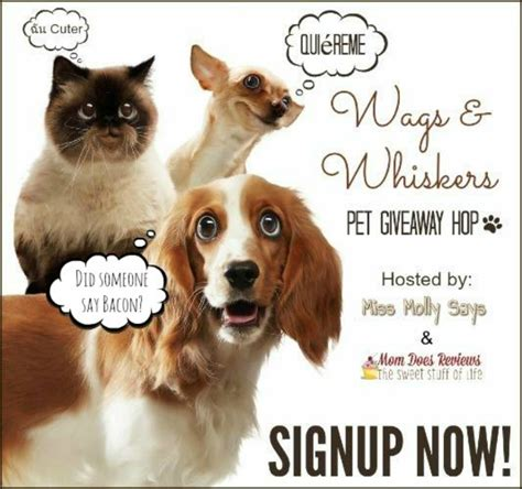 Pet Giveaways - bloggerswanted wags and whiskers pet giveaway hop sign ups miss molly says