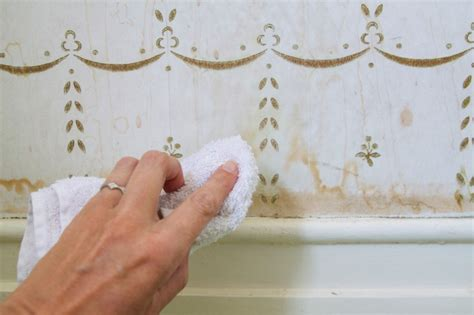 how to clean wall stains domestic science tip how to remove water stains from