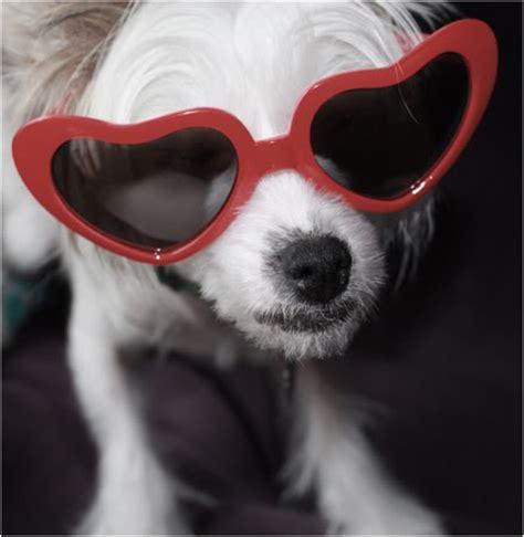 animals with sunglasses