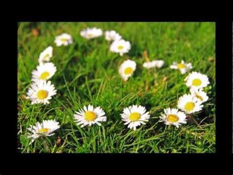 con i fiori ditelo con i fiori