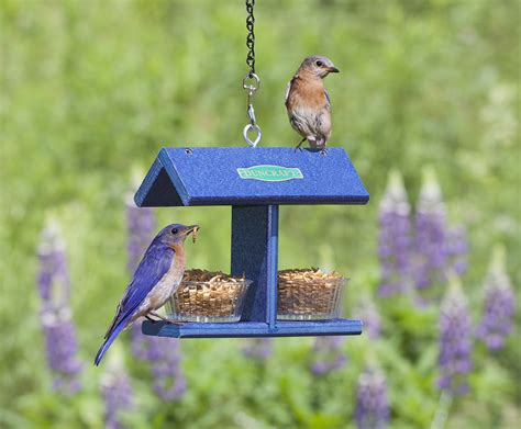 blue glass bird feeder