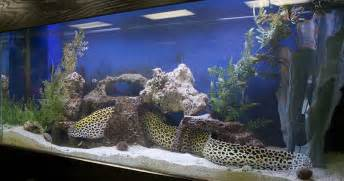 Have collected a few images for fish aquarium design to help you to
