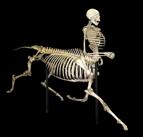 a skeleton skeleton pictures