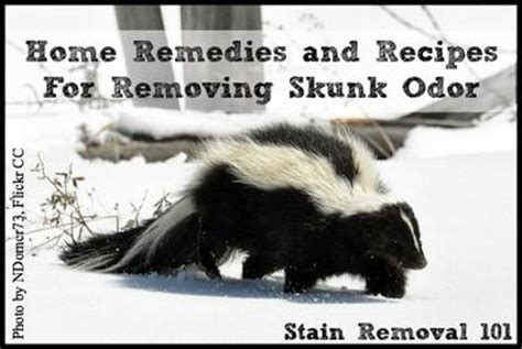skunk repellent home remedy home review