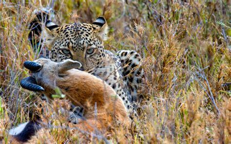 imagenes de la vida salvaje serengeti