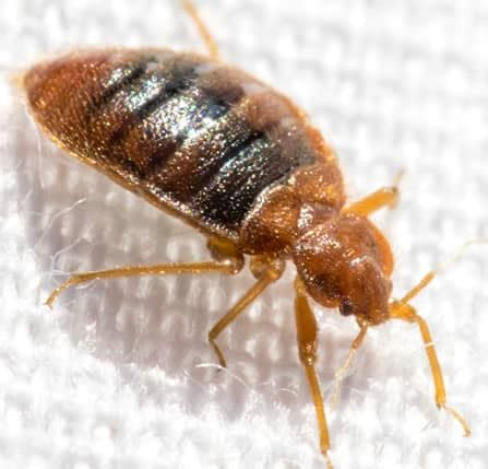 bed bug net warning signs of bed bugs