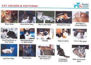 cat color chart cats pets to go