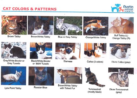 Guide to Cats   Pets to Go