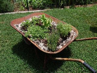 portable herb garden how to create a portable herb garden gardenvoice