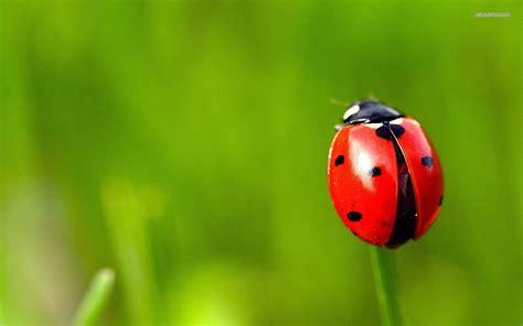 ladybug document bug cliparts co