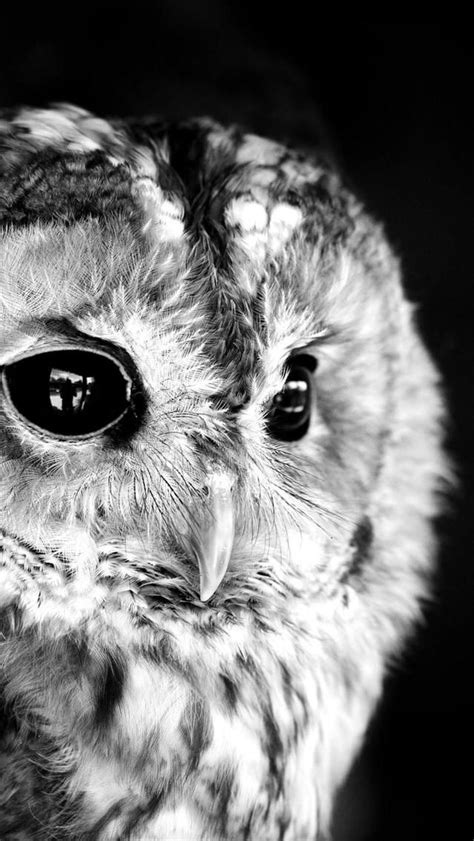 black and white animals birds 640x1136 iphone 5 s ready wallpaper download