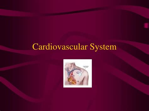 Ppt Cardiovascular System Powerpoint Presentation Id Powerpoint On Cardiovascular System