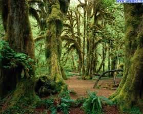 Habitat Chandelier Sfondi Foresta 110 Sfondi In Alta Definizione Hd