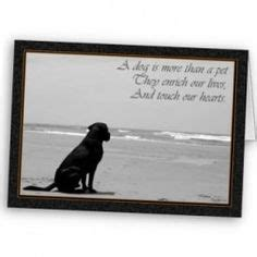 comforting words for loss of a pet 1000 images about animals on pinterest pet sympathy