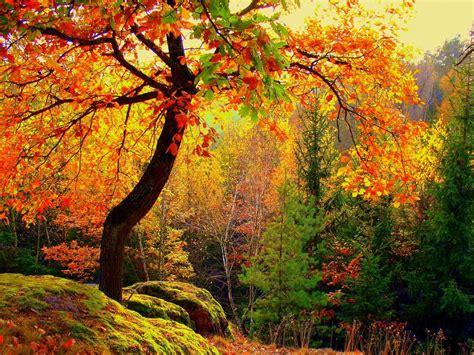 imagenes naturaleza otono im 225 genes de bosques oto 241 o wallpapers paisaje del vector